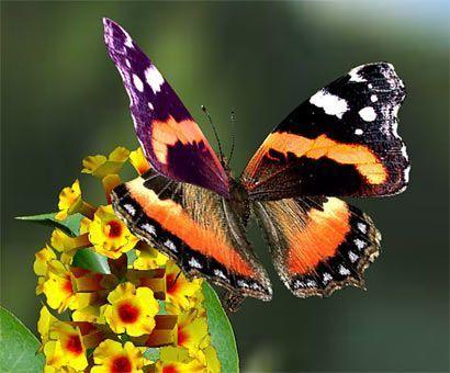 Le papillon 0n342iqj