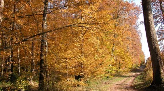 L'automne est cousu de moments de grâce qui ne durent pas. dans Belles images j4yzj9rj
