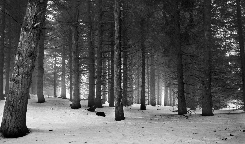bois vol la nuit - photo #29