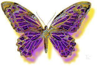 Gifs...Papillons