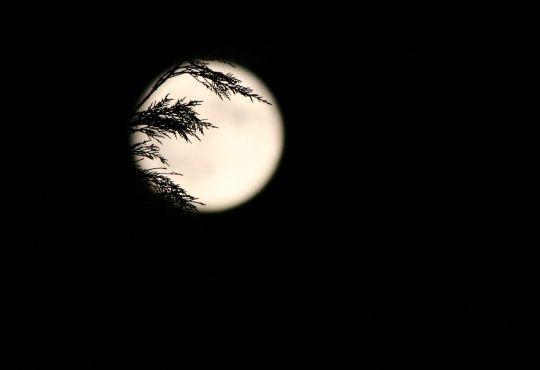 La Lune blanche ... dans Poésies, Fables, contes, ... (171) x1wv3k08